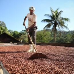 Plantation Brésil chocolat Valrhona